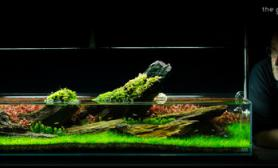 水草缸造景沉木水草泥化妆砂青龙石90CM尺寸设计101
