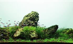 沉木青龙石水草造景90CM尺寸设计11