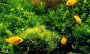 为水草布景的六大要点