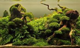 珊瑚莫斯状态造景木化石搭配水草缸