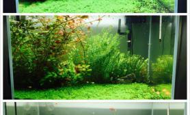 水草造景是不是越来越难看了?