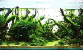 150cm原始森林