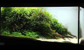水草缸造景沉木水草泥化妆砂青龙石120CM尺寸设计65