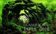 2016ADA水草造景大赛参赛作品《洞见》