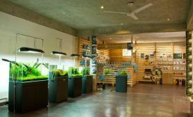 国外水族店水草缸造景ADAINDIA