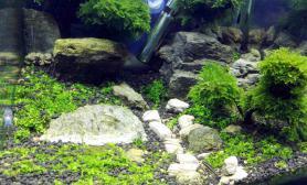 即使30的小缸水草缸也要有内容沉木杜鹃根青龙石水草泥
