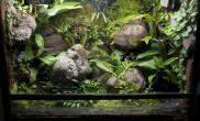雨林水陆生态缸22