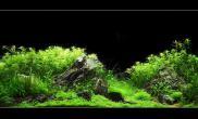 水草缸造景沉木水草泥化妆砂青龙石90CM尺寸设计54