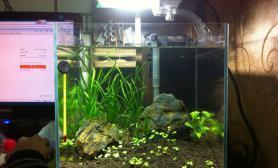 鱼缸造景新开30方缸水草缸大家给点意见鱼缸水族箱