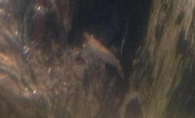 黑壳虾变红