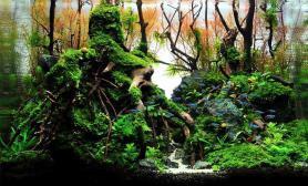 水草缸造景沉木水草泥化妆砂青龙石45CM及以下尺寸设计47