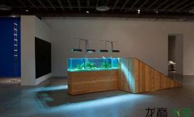 展览馆里的水草缸水草缸酷炫鱼缸水族箱