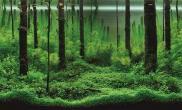 浅谈水族造景中的丛林式布局
