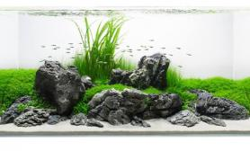 关于鱼缸造景 鱼缸如何造景介绍