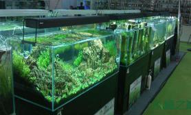 水草造景2013年中国水草造景大赛指定超白缸、灯具、底柜
