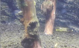 请问这缸里是什么藻沉木杜鹃根青龙石水草泥谢谢
