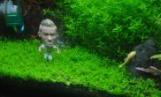弱弱的问一句水草缸这个造景可以参赛吗?