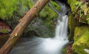 分享:我收藏的一些水草造景素材图片
