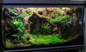 雨林缸—《尼格罗-植物园》
