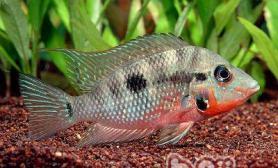 热带鱼饲养的水质要求