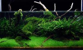 水草缸造景沉木水草泥化妆砂青龙石90CM尺寸设计55