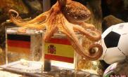 """神奇章鱼再""""蒙""""比赛德国球迷失望(图)"""