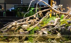 沉木青龙石原生态鱼缸29