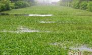 水葫芦和金鱼藻的区别