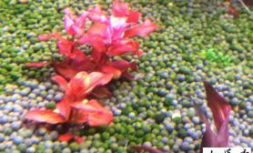 花儿为什么这样红~