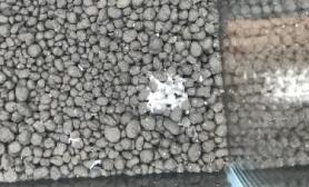 水草泥上有白色的东西 这是啥??