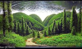 水族箱造景水草造景最美的图画