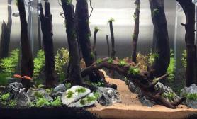 原始森林开缸三天沉木杜鹃根青龙石水草泥