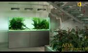 沉木MOSS青龙石造景缸与商业空间ADA风格
