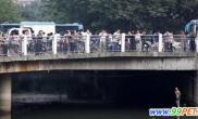 西湖水位大鲢鱼集体出逃引来市民争相捕捞(图)