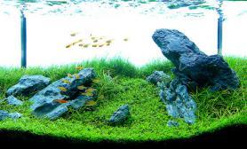 水草缸造景沉木水草泥化妆砂青龙石60CM尺寸设计24