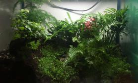 陪儿子做的雨林