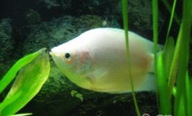 鱼缸使用活性炭过滤的原理