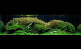沉木青龙石水草造景150CM及以上尺寸设计19