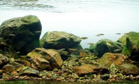 2015美国AGA水草造景大赛原生鱼缸组水草缸作品《芝林原生》获得优秀奖 水族箱