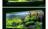 问一下大家这里都有什么水草水草缸想模仿一下