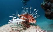 水质软硬度对热带鱼饲养的影响