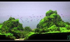 水草造景作品:水草造景(120cm)-44
