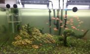 1图片2米开缸三周刮藻换水杜鹃根调整
