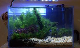 鱼缸造景三个月的草缸路程