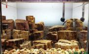 水草造景木化石莫斯小缸水草缸含变化沉木杜鹃根青龙石水草泥