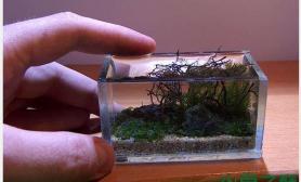 水族箱造景小草缸中有乾坤鱼缸水族箱