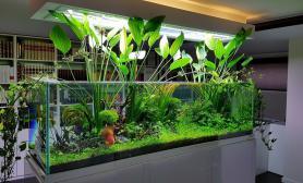 玻璃缸中的大自然85