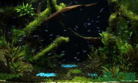 绿色丛林中出现神祕的喷泉水草缸这是水底世界还是海底世界?