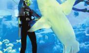 成都海洋馆8月1日开门迎客(图)