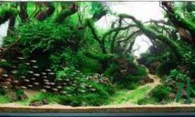 水草造景日记之2013ADA第四名